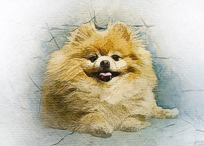 Пушистая собака