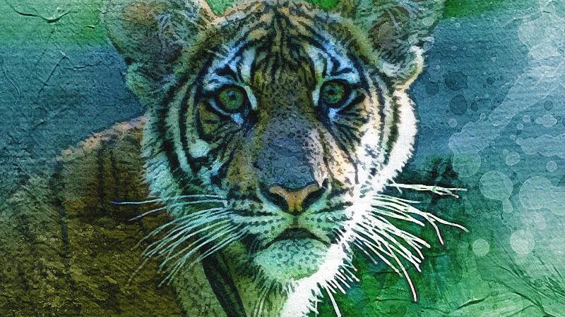 Тигр в Нью-Йорке заразился коронавирусом