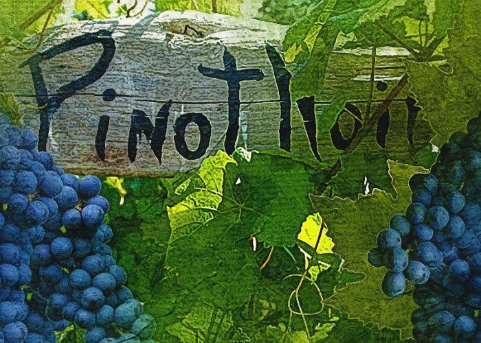 Пино нуар сорт винограда