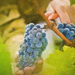 Популярное вино