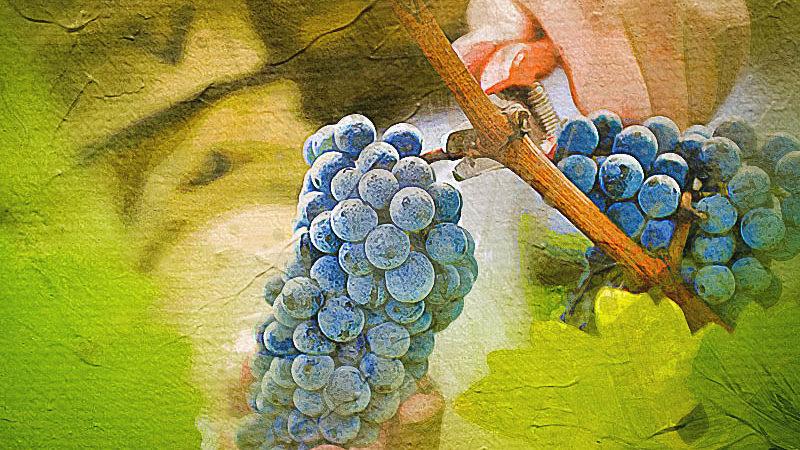 Популярные вина: ТОП 10